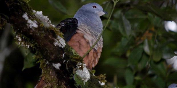 hutan-papua
